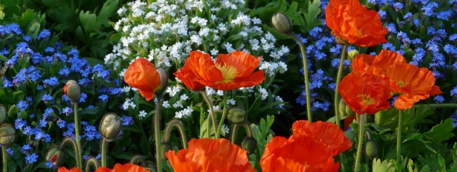 Tuin_bloemen