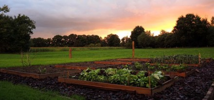 kitchen-garden-697894_640